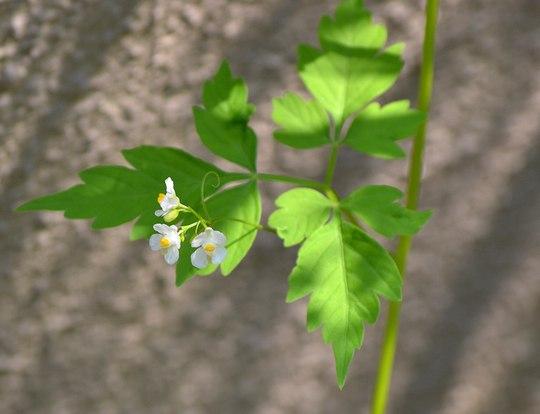 路傍の花、樹々の鳥(87) ~ 夏の提灯 ~_b0102572_13392625.jpg