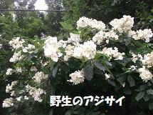 d0017084_935401.jpg