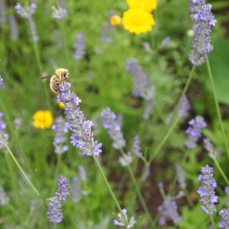 オカムラサキのお花を収穫_a0292194_18184588.jpg