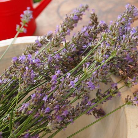 オカムラサキのお花を収穫_a0292194_18235122.jpg