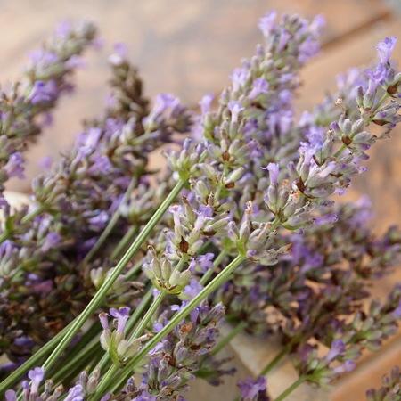 オカムラサキのお花を収穫_a0292194_18241230.jpg