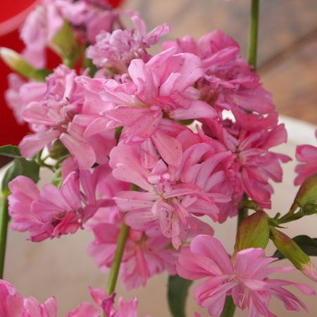 オカムラサキのお花を収穫_a0292194_18271752.jpg
