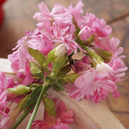 オカムラサキのお花を収穫_a0292194_1827524.jpg