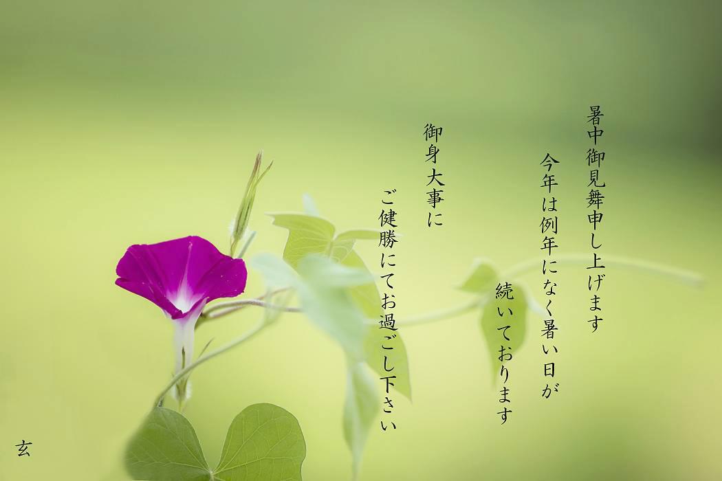暑中お見舞い_c0077395_15031940.jpg