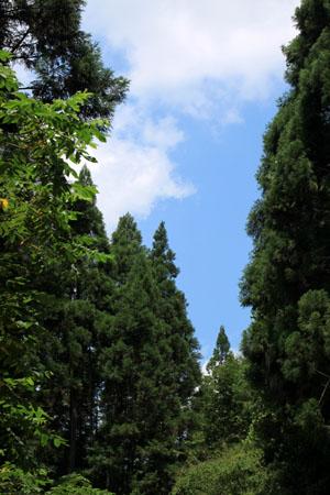 雲が畑 森の茶房_e0048413_21271892.jpg