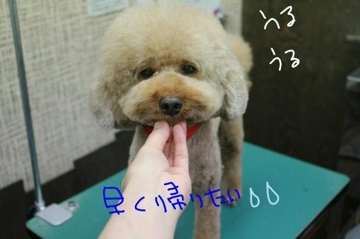 b0130018_00031191.jpg