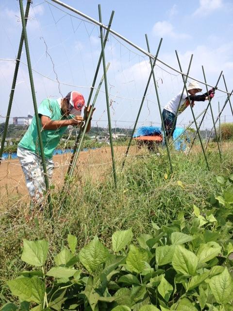 今朝は 石川さん 田中さん 飯田の3名です 刈った草達を燃やしていきます_c0222448_12012378.jpg