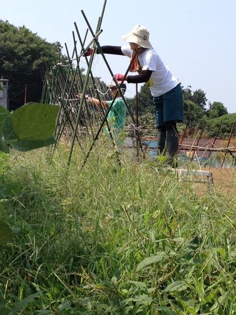 今朝は 石川さん 田中さん 飯田の3名です 刈った草達を燃やしていきます_c0222448_12013507.jpg