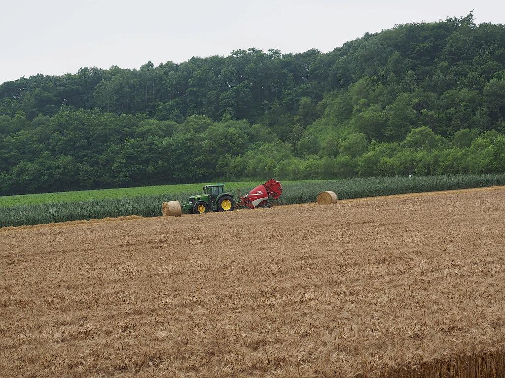 麦の収穫作業_f0138096_13513137.jpg