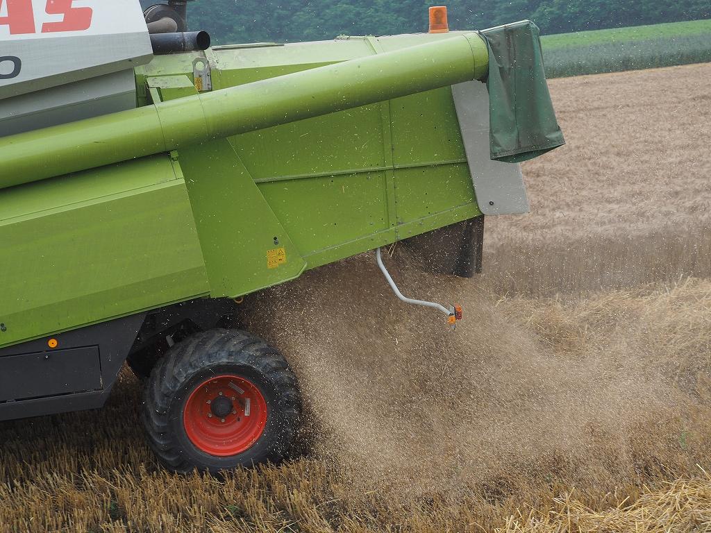 麦の収穫作業_f0138096_13515883.jpg