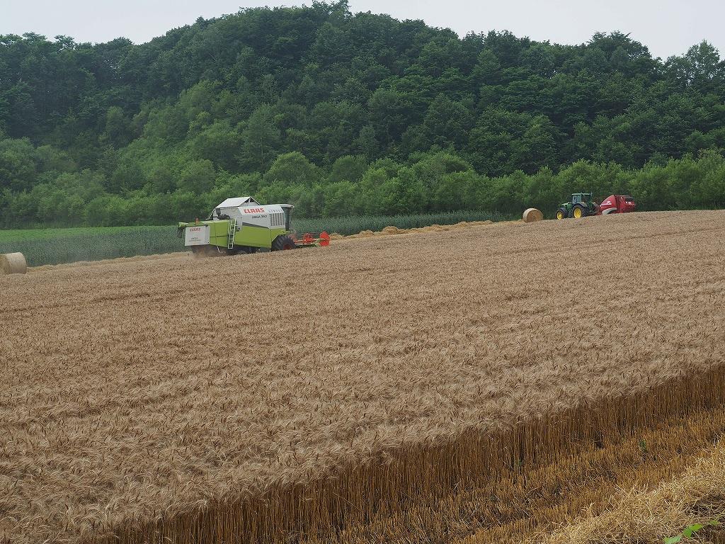 麦の収穫作業_f0138096_13521873.jpg