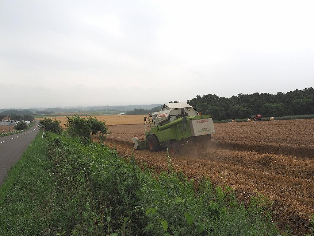 麦の収穫作業_f0138096_135261.jpg