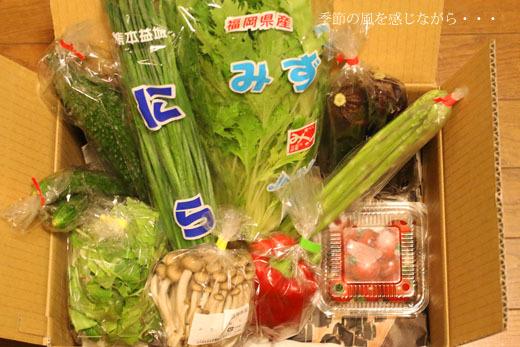 激太りに驚きました ~ヘルシー新鮮野菜ランチ~_a0264538_15370317.jpg