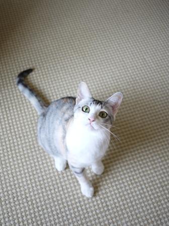 猫のお留守番 はるちゃんソルくん編。_a0143140_22333891.jpg