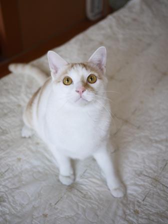 猫のお留守番 はるちゃんソルくん編。_a0143140_2234777.jpg