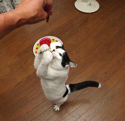 焼きカツオ祭り_a0028451_13021151.jpg