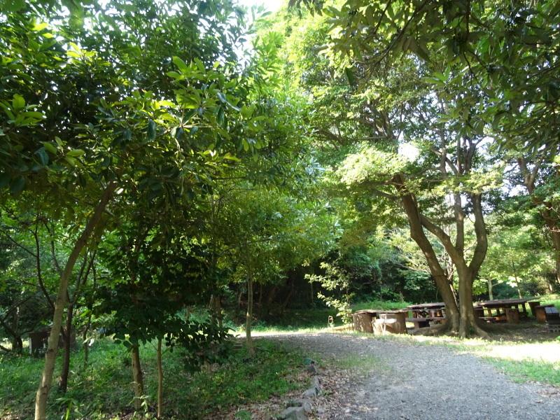 平成27年8月度うみべの森を育てる会運営委員会_c0108460_15411016.jpg