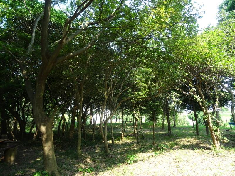 平成27年8月度うみべの森を育てる会運営委員会_c0108460_15432340.jpg