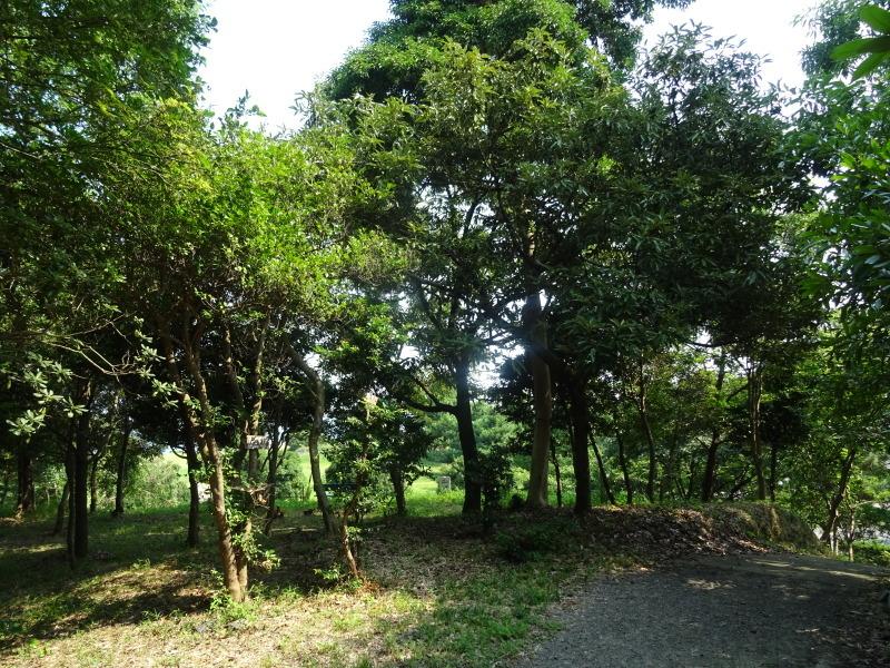 平成27年8月度うみべの森を育てる会運営委員会_c0108460_15432663.jpg