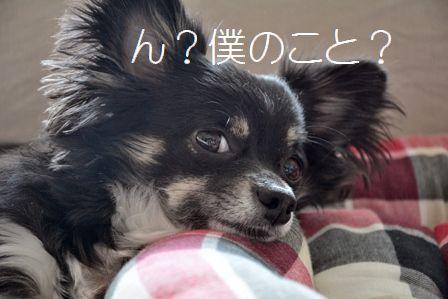 f0189867_951517.jpg