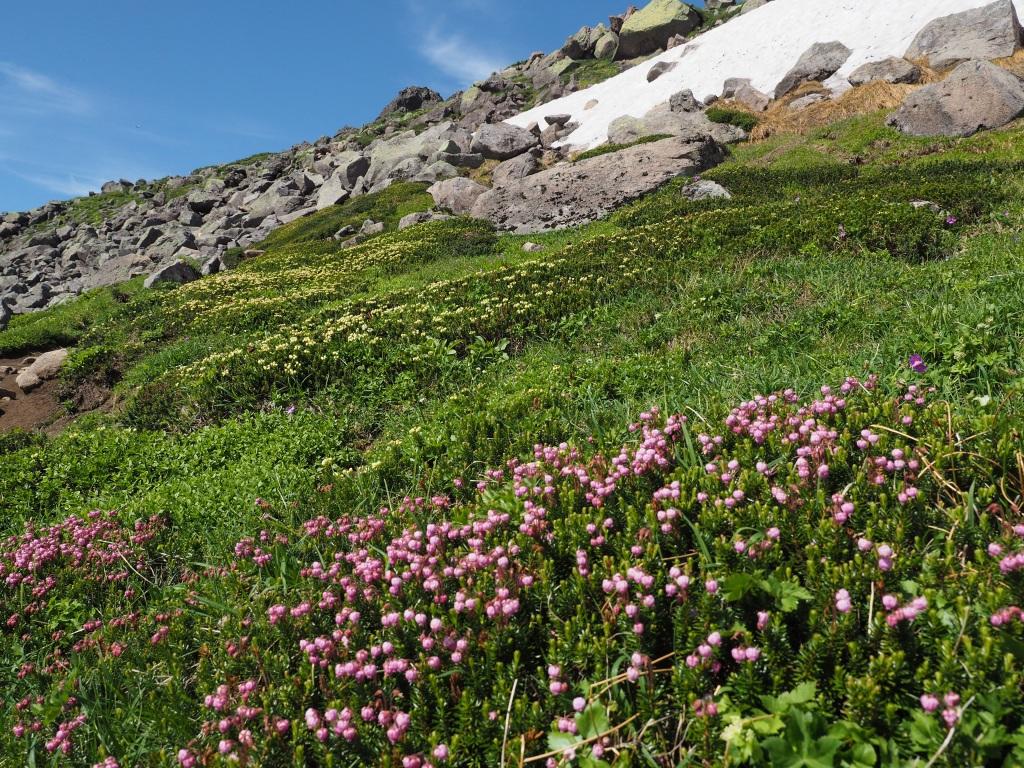 大雪山3色(緑岳、白雲岳、赤岳)登山、8月3日-速報版-_f0138096_19413412.jpg