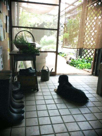 通り土間で涼む犬…。_d0077603_9453162.jpg