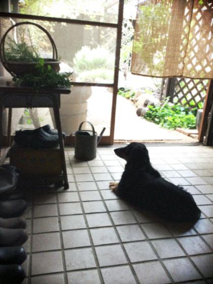 通り土間で涼む犬…。_d0077603_9455190.jpg
