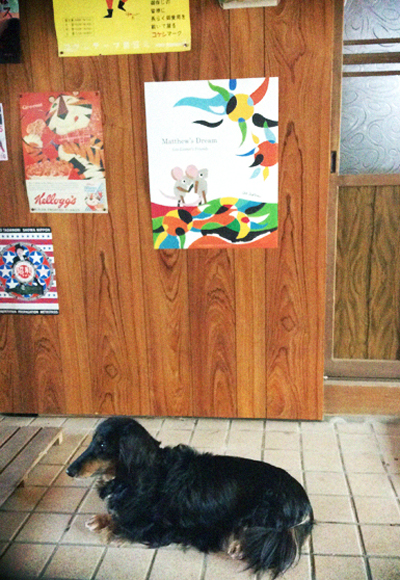 通り土間で涼む犬…。_d0077603_9465932.jpg