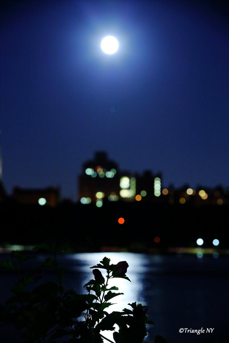 対岸のBlue Moon Flower_a0274805_23142953.jpg