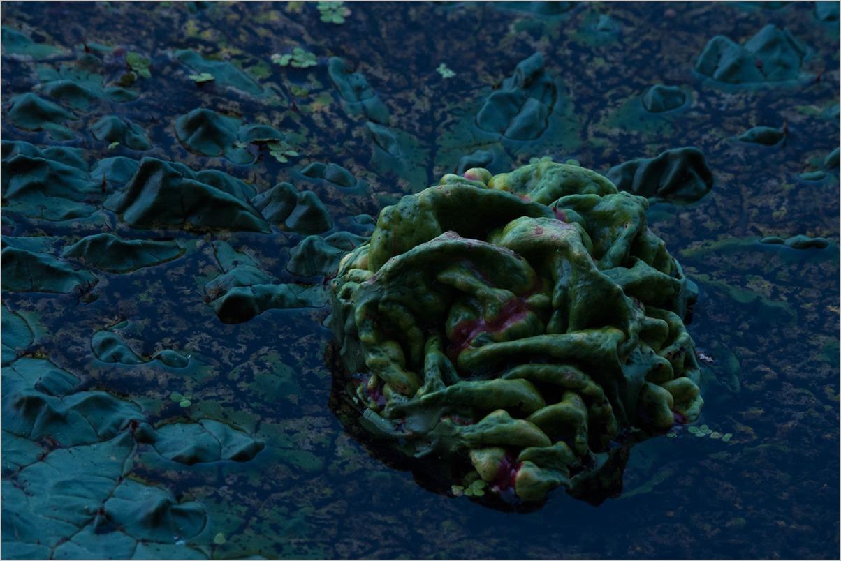 オニバスとシオカラと #OLYMPUS OM-D E-M5II_c0065410_2346544.jpg