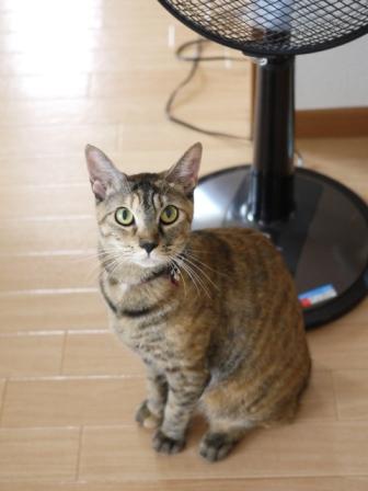 猫のお留守番 KEEちゃんクリボーくん編。_a0143140_22434647.jpg
