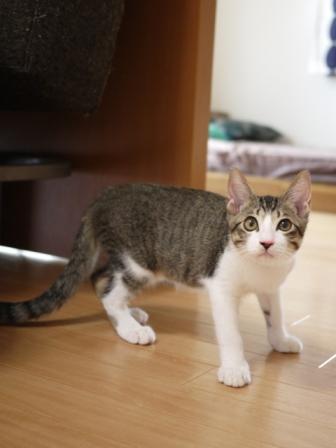 猫のお留守番 KEEちゃんクリボーくん編。_a0143140_22441357.jpg