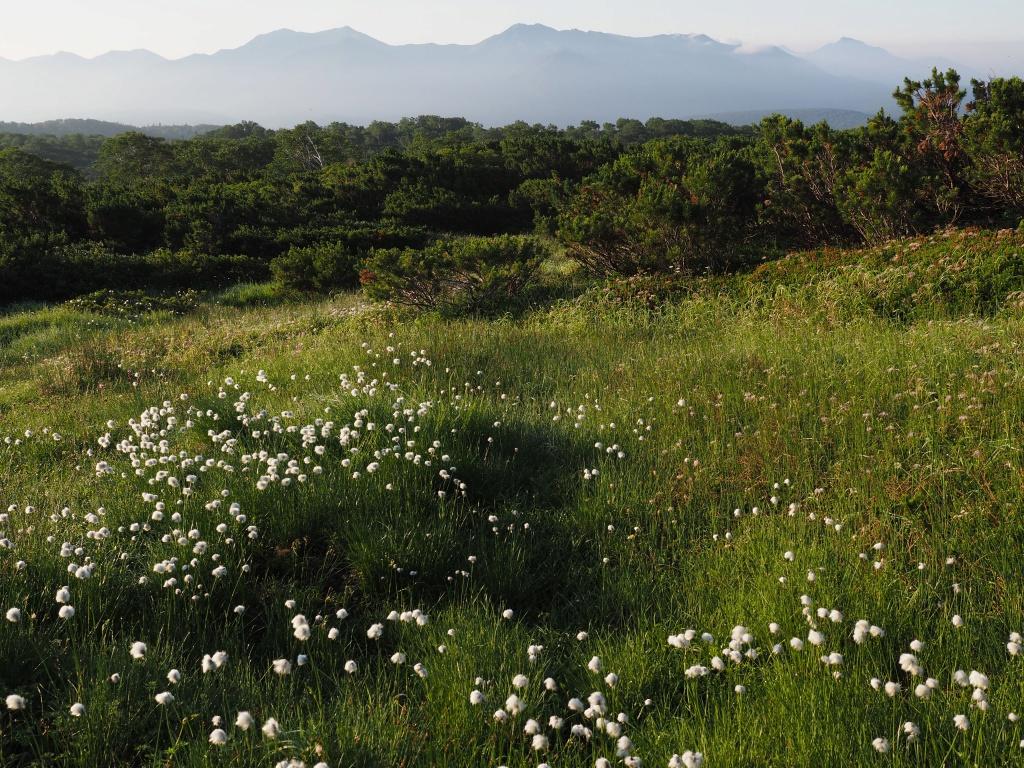 大雪3色登山、8月3日-緑岳編-_f0138096_11394738.jpg