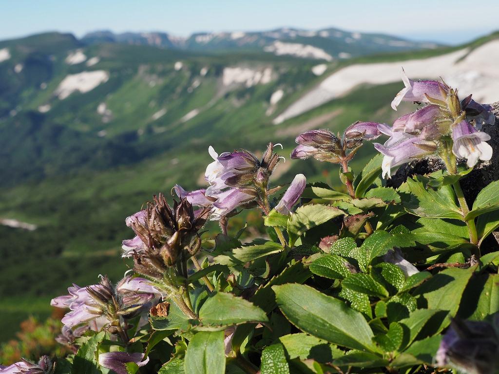 大雪3色登山、8月3日-緑岳編-_f0138096_11404316.jpg