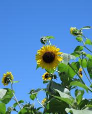 20日まで、夏休みを頂きます_c0218903_8225111.jpg