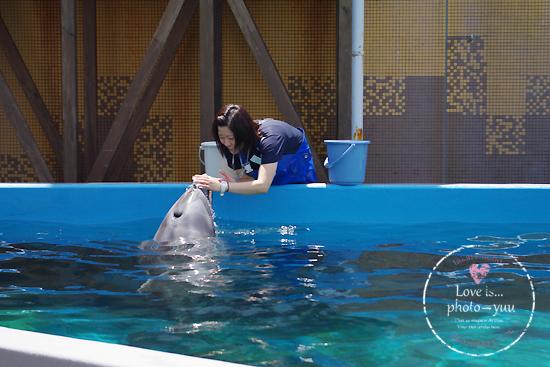 イルカで涙_f0111908_3251422.jpg