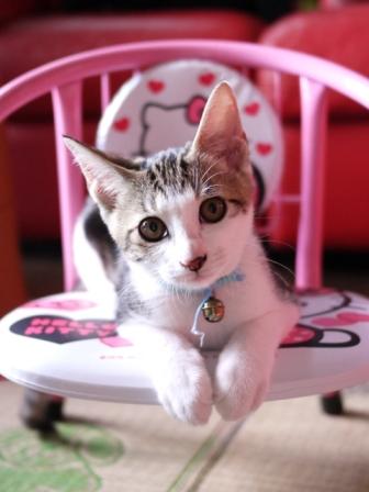猫のお留守番 ラッキーくん編。_a0143140_22273058.jpg