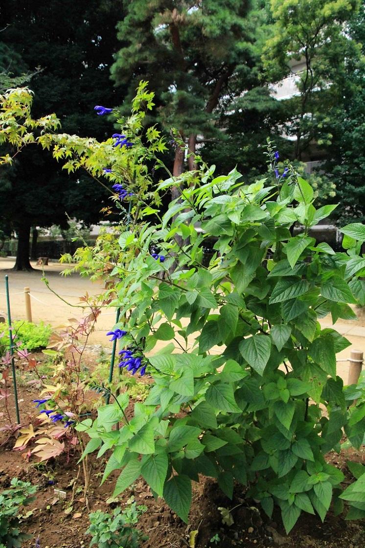 水をもらっている成果 ~四季を感じる散歩道・福岡中央公園~_a0107574_17404641.jpg