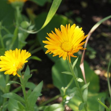 春のお花と夏のお花_a0292194_15133330.jpg
