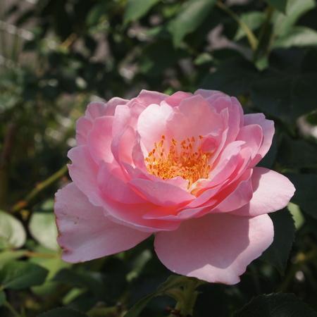 春のお花と夏のお花_a0292194_15185133.jpg