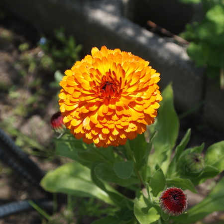 春のお花と夏のお花_a0292194_1523862.jpg
