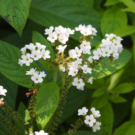 春のお花と夏のお花_a0292194_15362187.jpg