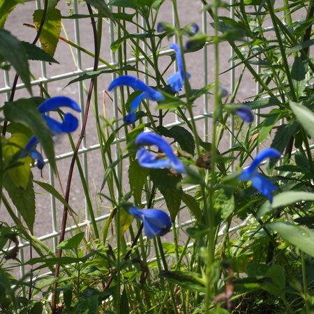 春のお花と夏のお花_a0292194_159930.jpg