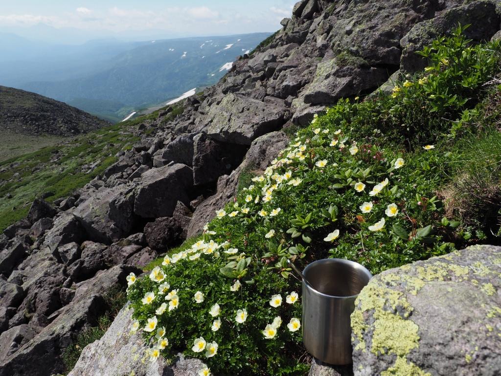 大雪3色登山、8月3日-白雲岳編-_f0138096_12101756.jpg