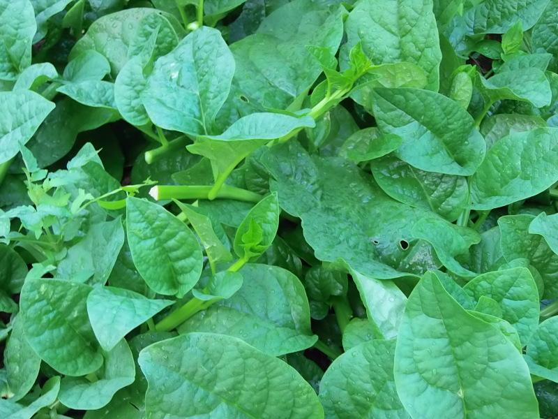 理想な生活は、植物と。_a0125419_06285460.jpg
