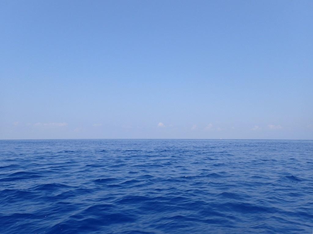 御蔵島レポート~イルカに会った平地編~_e0015223_18384469.jpg