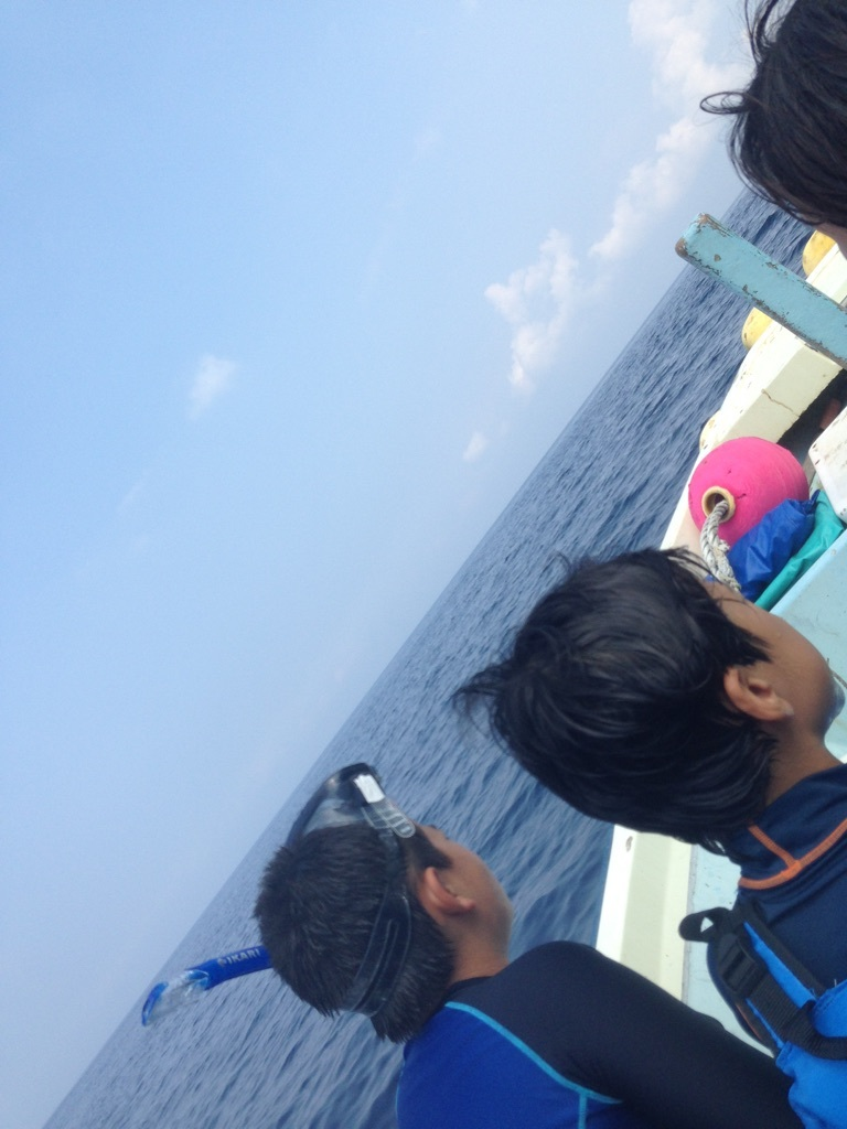 御蔵島レポート~イルカに会った平地編~_e0015223_22380715.jpg