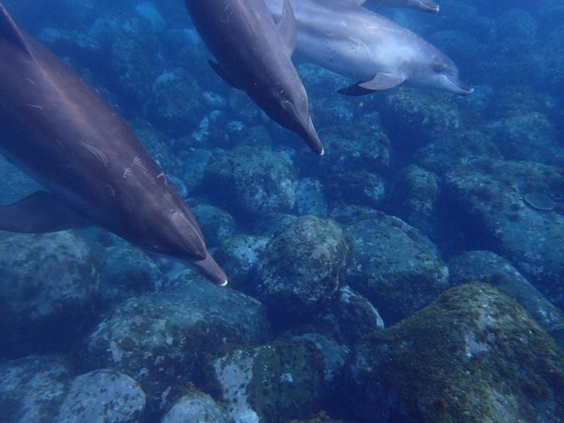 御蔵島レポート~イルカに会った平地編~_e0015223_22385724.jpg