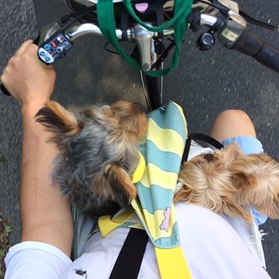 自転車通勤_d0248537_11201258.jpg