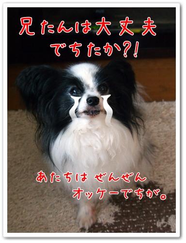 d0013149_11445551.jpg